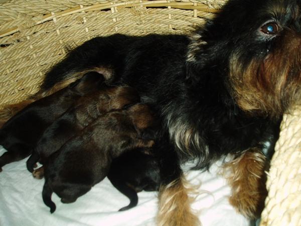 вера со щенками